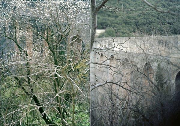 JoAnn Verburg's trees