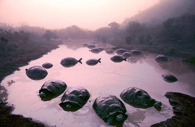 Tortoises
