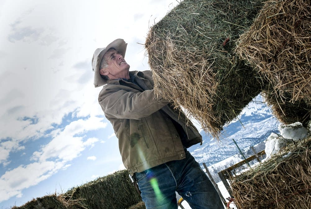 Bill Fales works on his ranch