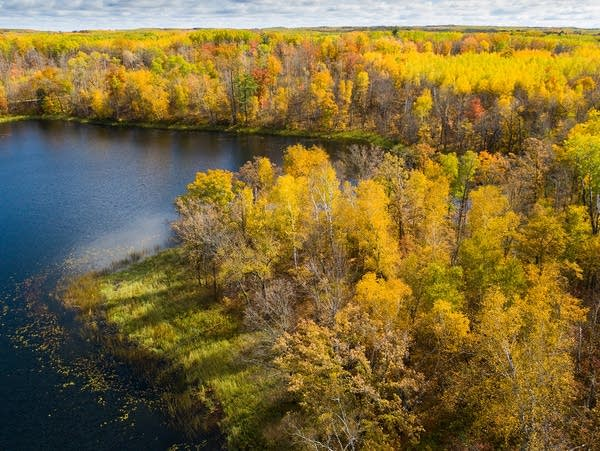 Minnesota forest in fall