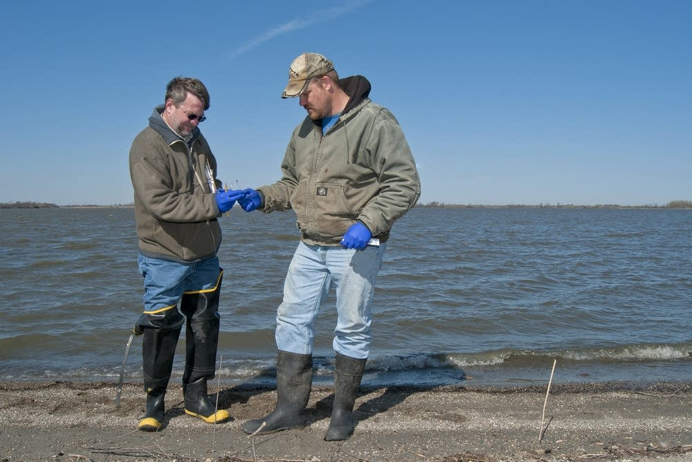 DNR workers collected bird fecal samples.