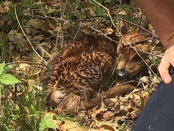 Firefighters and deputies helped rescue a pair of newborn fawns.
