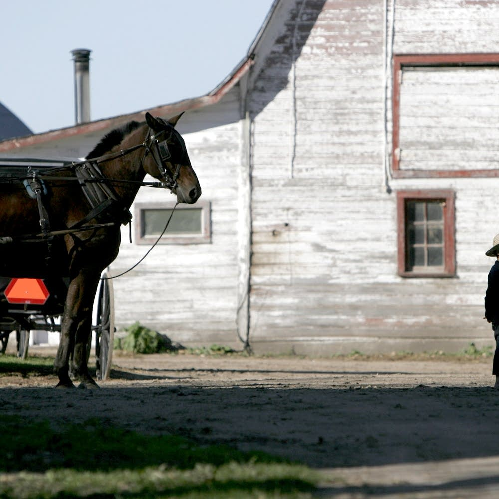 Minnesota a top pick for settlement as Amish migrate west