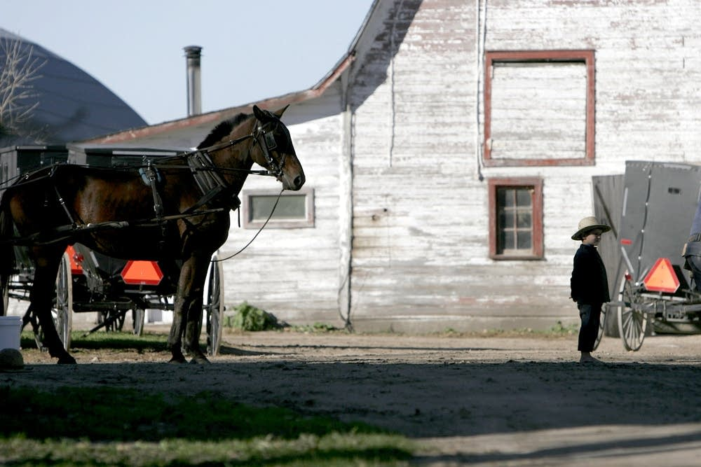 Amish in Clarissa, Minn.