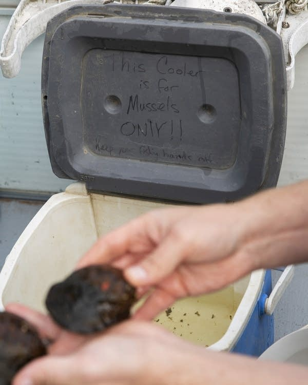 "The lid of a cooler reads ""This cooler is for mussels only!"""