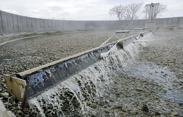 Bacteria living in a bed of rocks helps break down wastewater.