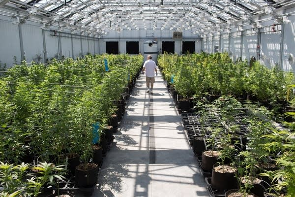 Medical marijuana growing facility