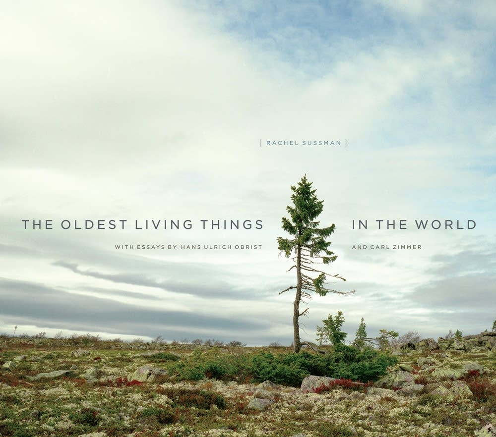 'The Oldest Living Things in the World'