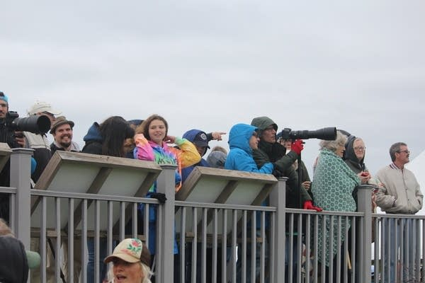 A crowd watches bison from atop an observation deck
