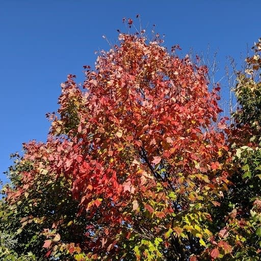 Fall color at the Huttner Weather Lab