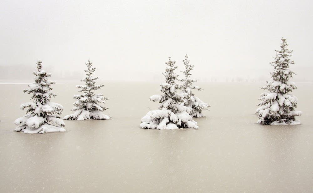 Snow-covered trees sit in floodwaters