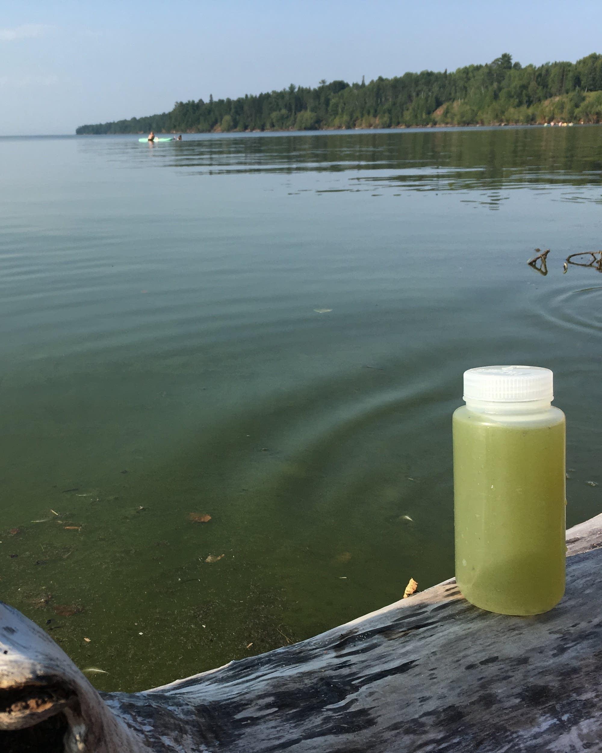 Scientists investigating 'unprecedented' algae bloom in Lake