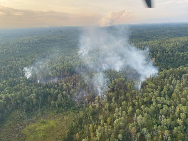 A wildfire burns in a forest