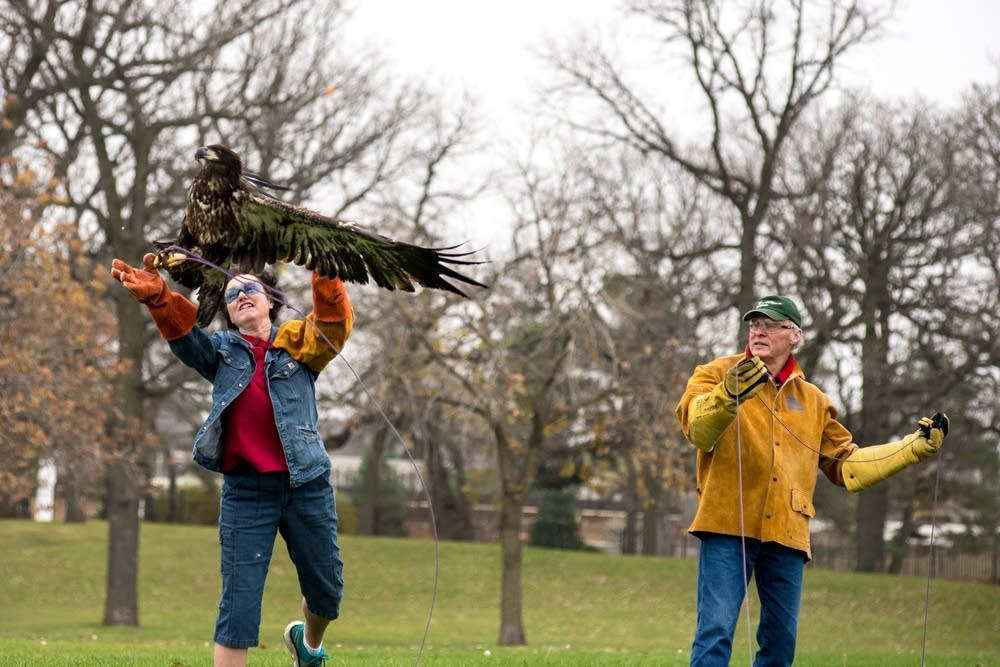 Janice Constable releases a juvenile bald eagle.