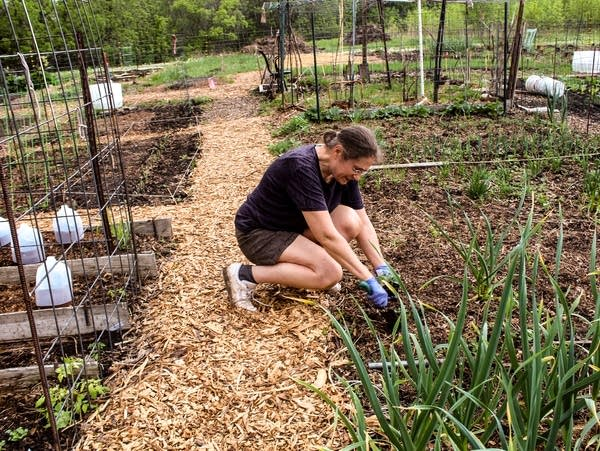 A woman kneels down to dig in the garden.