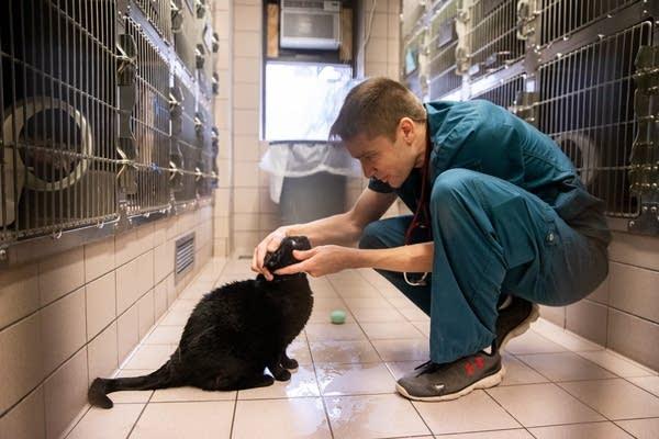 A vet looks into a cat's eye.