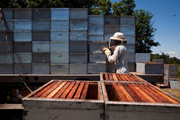 Hive health