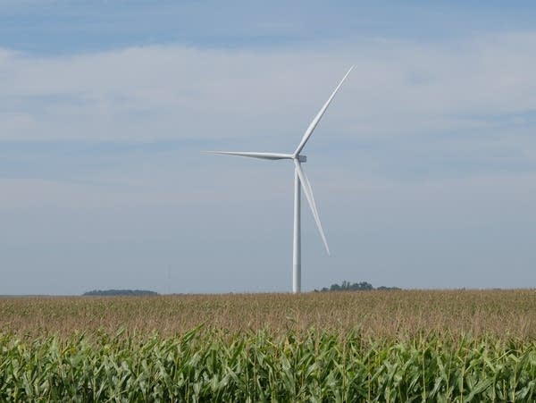 A wind turbine in a corn field