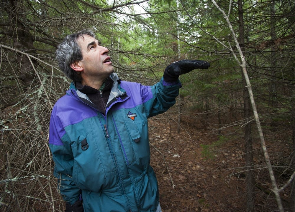 Mark White, forest ecologist