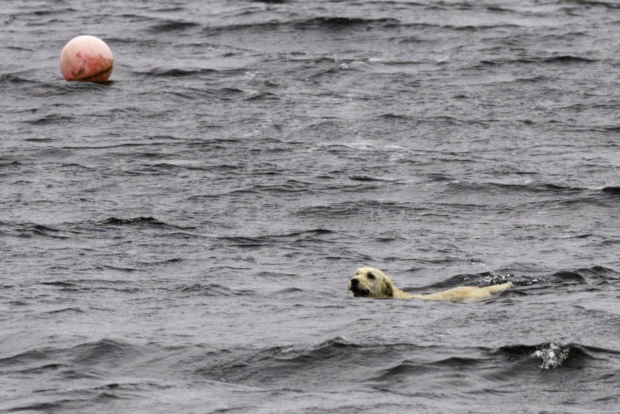 Edinburgh - 20 - Seal