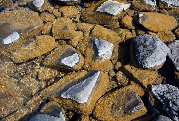 Didymo on rocks
