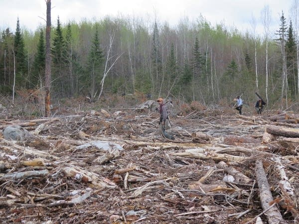 The Nature Conservancy hopes to restore this recently logged site