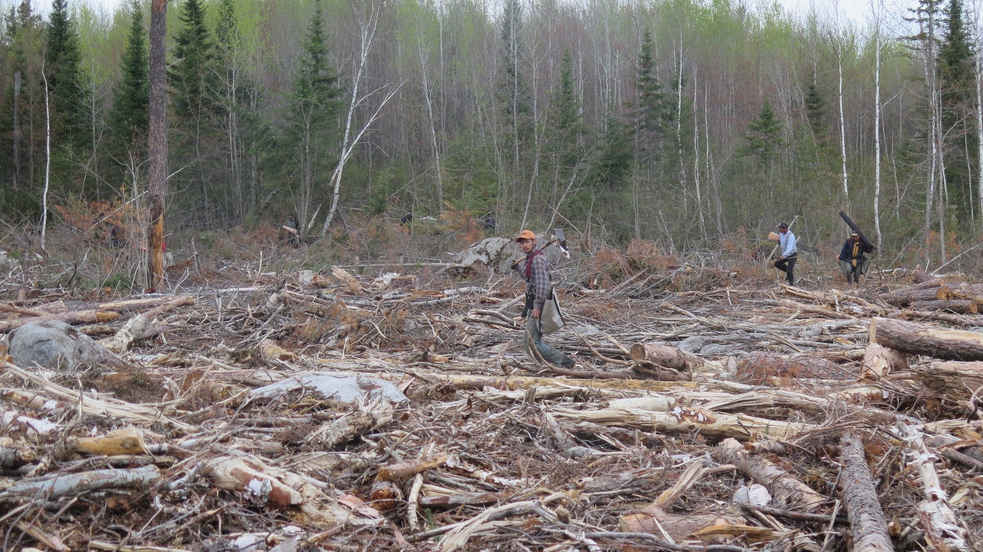 Second Edition Restoration of Boreal and Temperate Forests