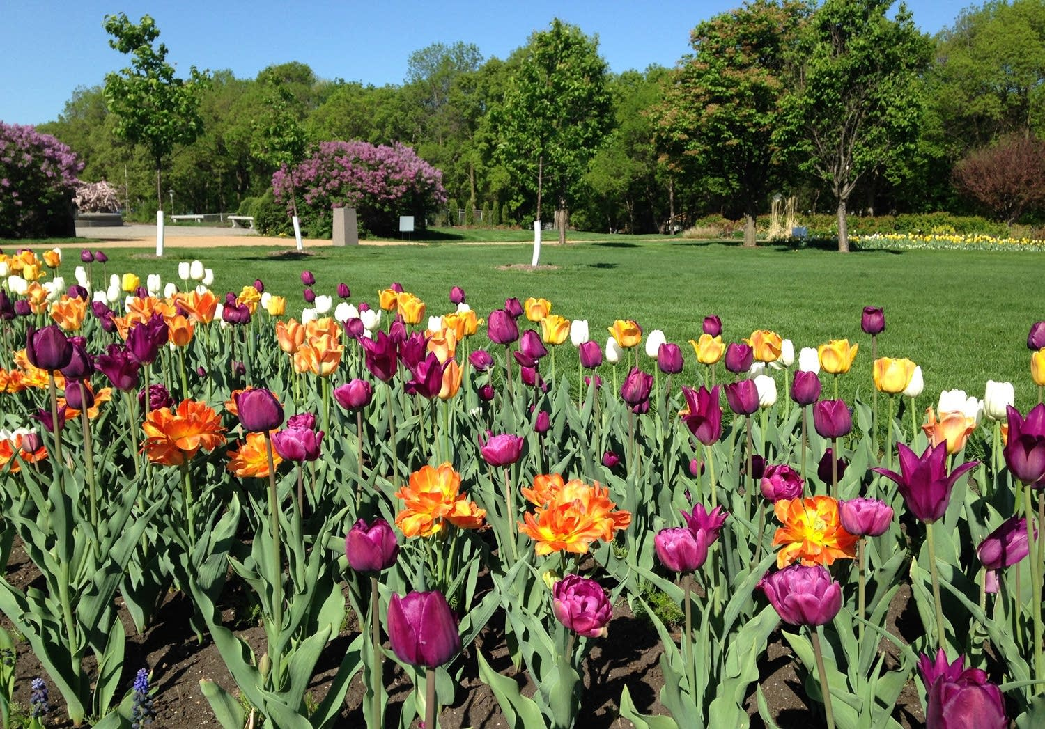Flowers in bloom at Lake Harriet Rose Garden