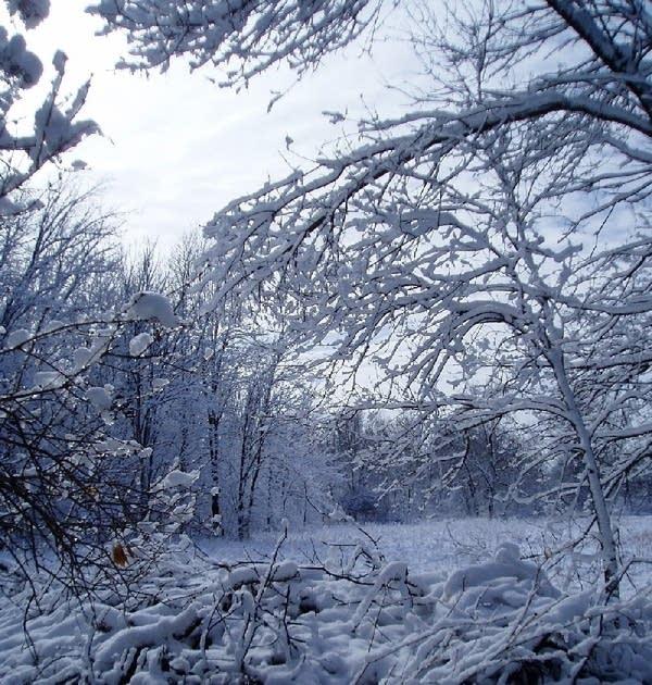 snowy_scene080401