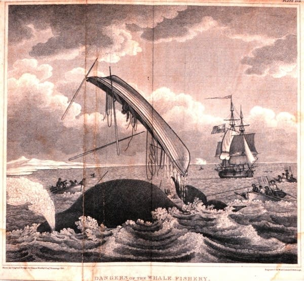 'Dangers of the Whale Fishery'