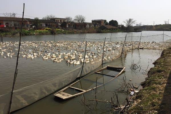 On the banks of Poyang Lake