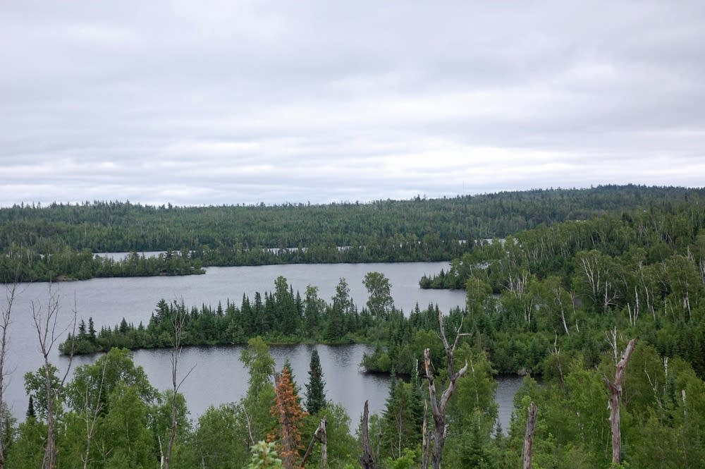 Tops of dead trees at Moose Lake