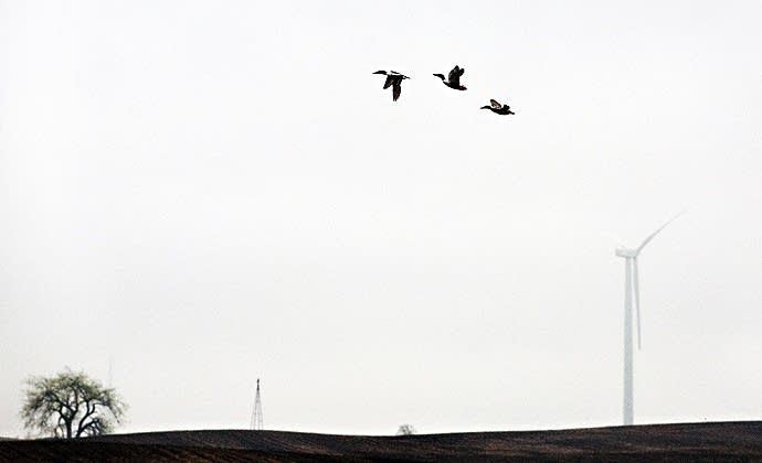 Ducks and turbine