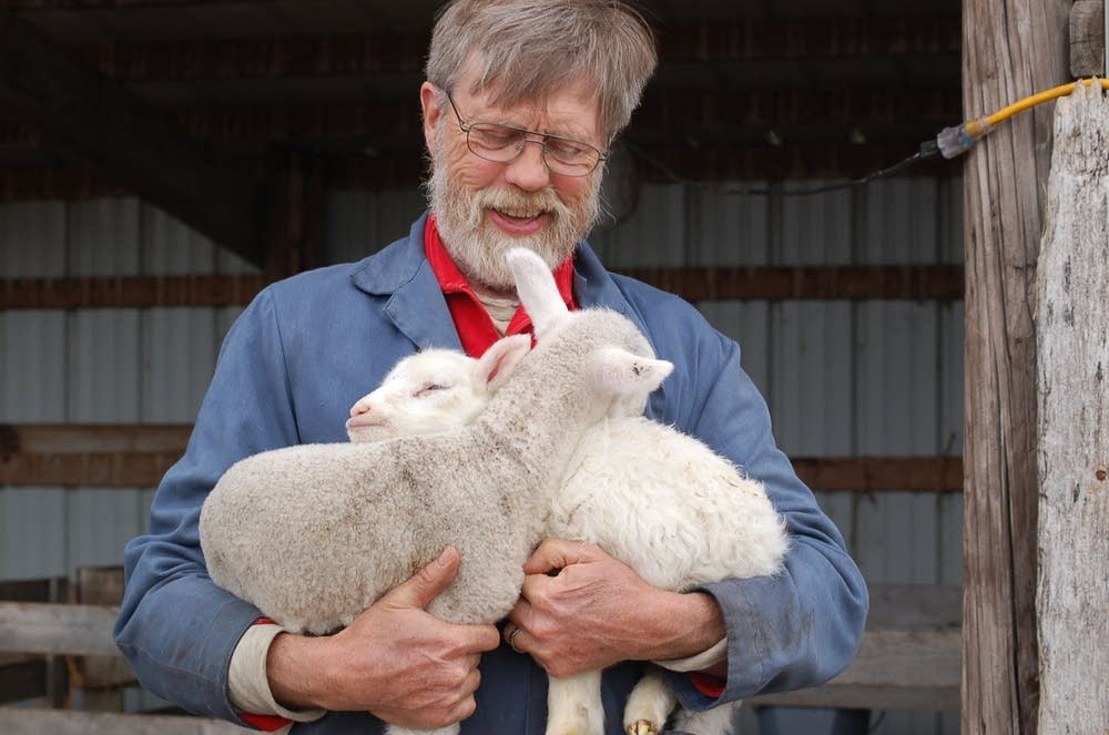 Holding a couple lambs