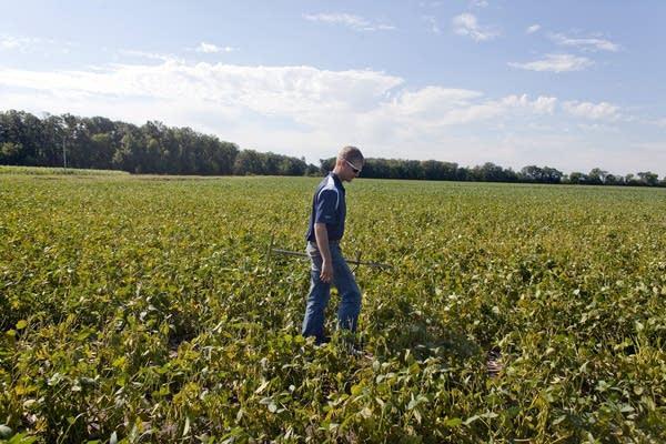 Inspecting soil moisture