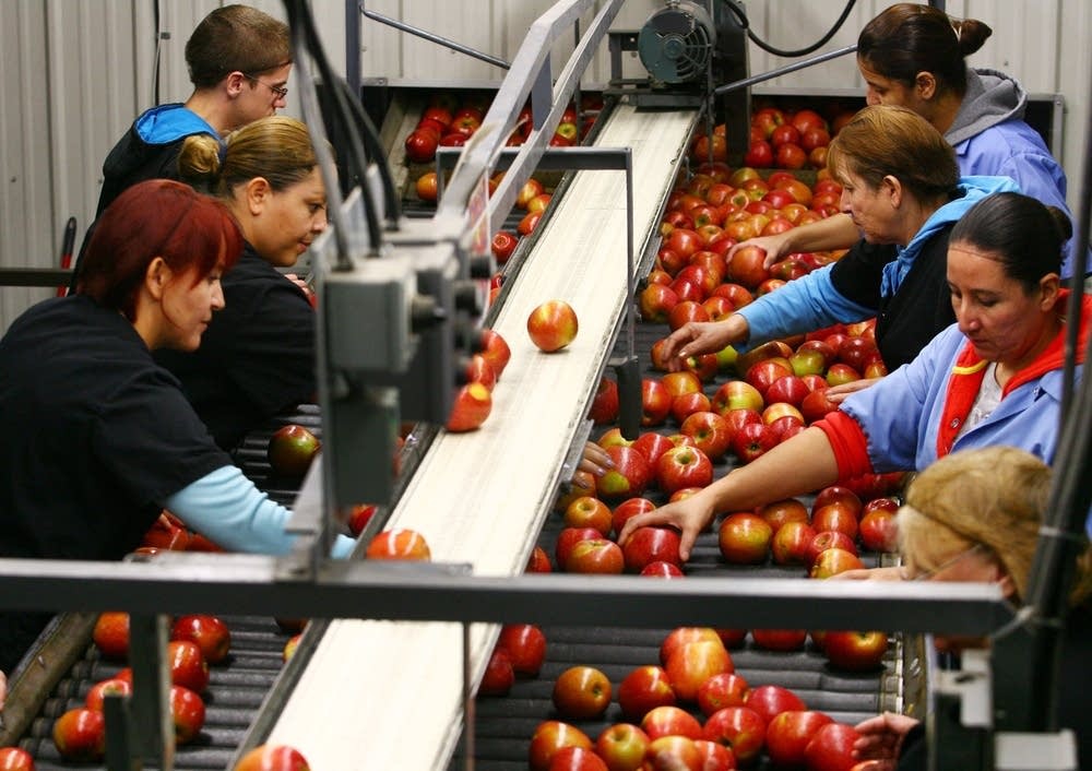 Sorting apples