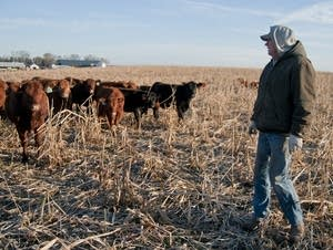 Grant Breitkreutz looks for sick or injured cattle