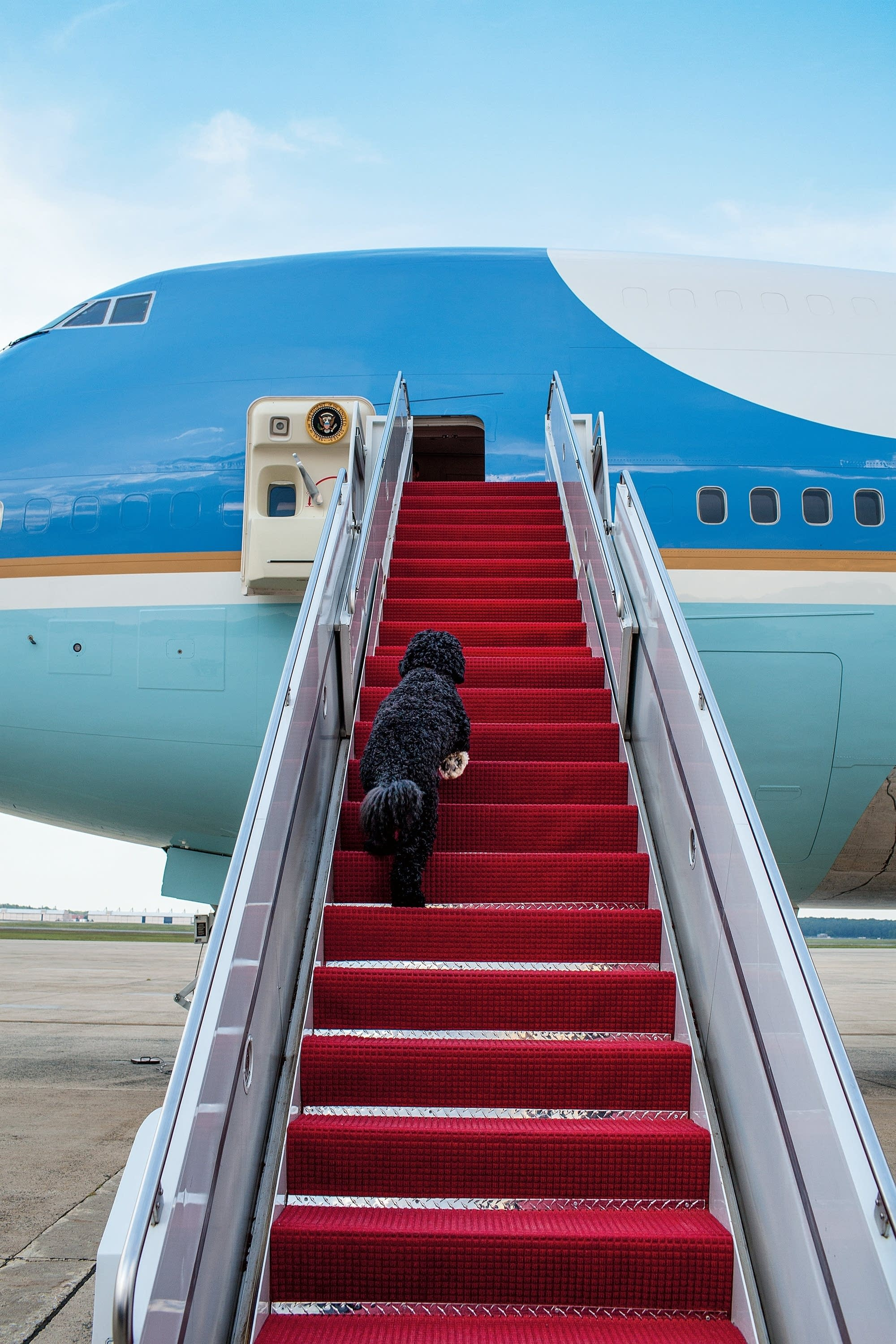 Bo, the first dog, boards Air Force One for a weekend trip to Chicago.