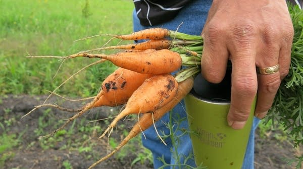 David Manuel holds carrots from the garden.