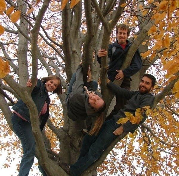 Larsons a tree