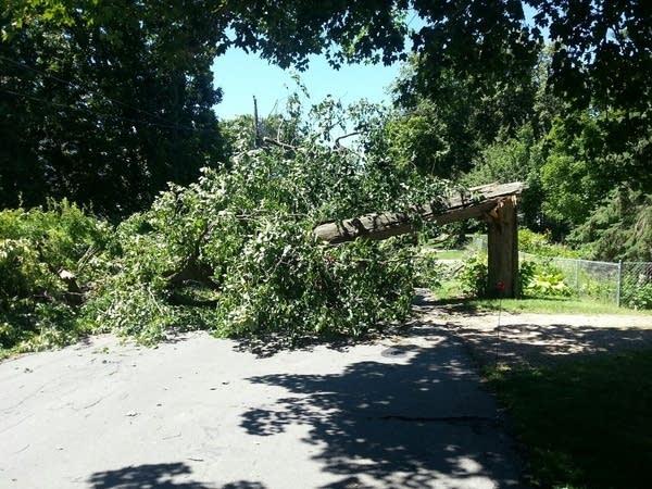 529 tree across road