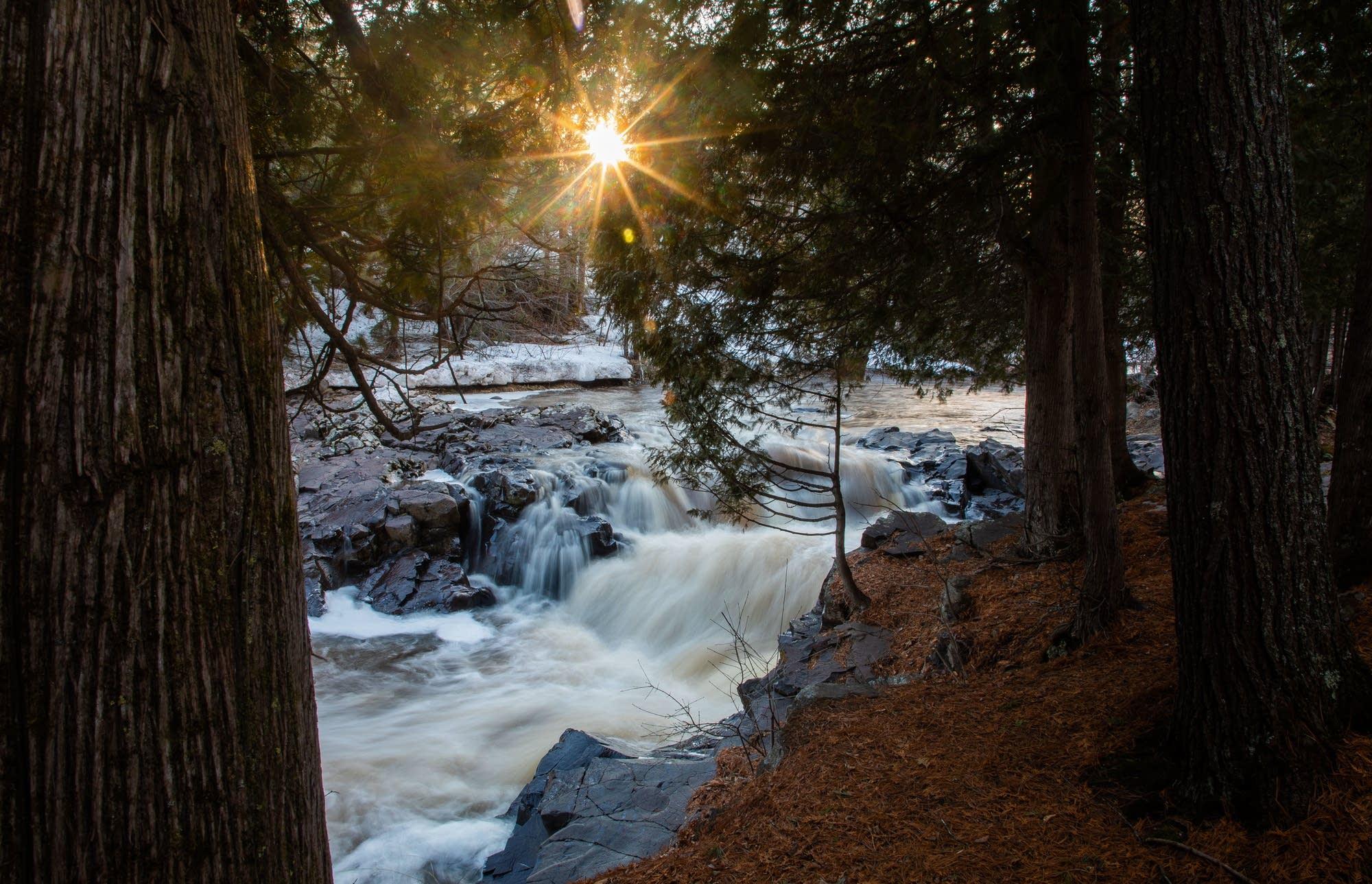 he evening sun shines through the trees along Amity Creek.