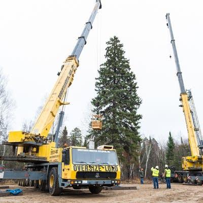 Dd Christmas.Minnesota Spruce Heads East To Become Capitol Christmas Tree
