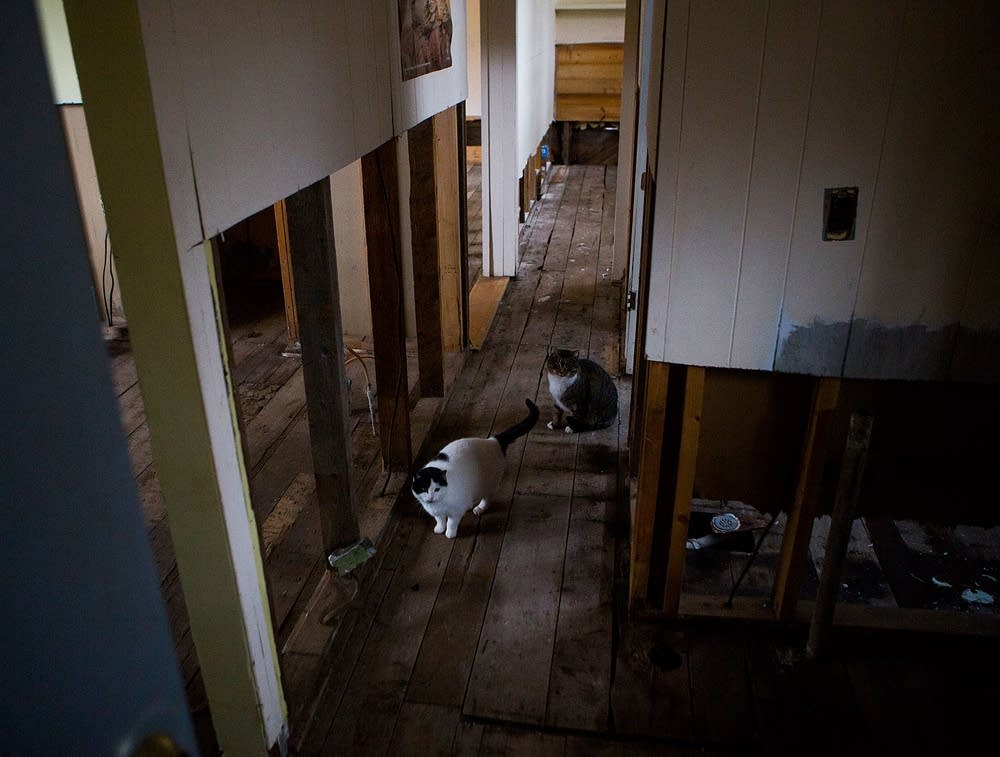 Linda Berg's cats in damaged home
