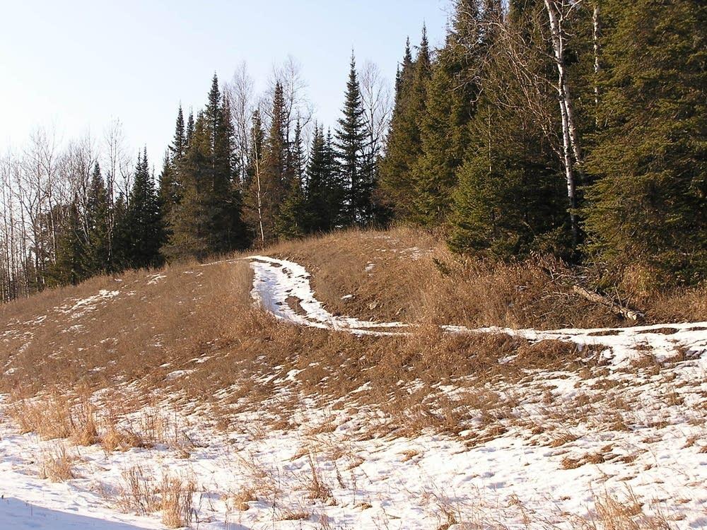 ATV tracks and knapweed