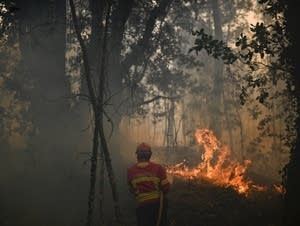 A firefighter using a hose tries to stop flames during a wildfire.