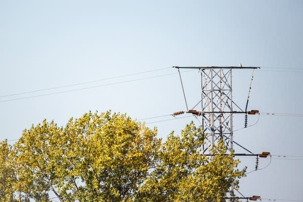 A far-off falcon perched on a power line with a tree in front.