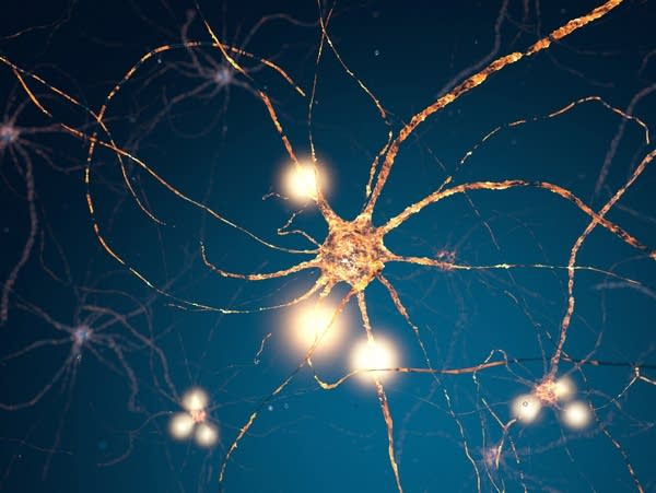 Neuron cell body with dendrites and synapses