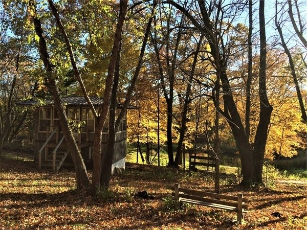 small property in the fall woods