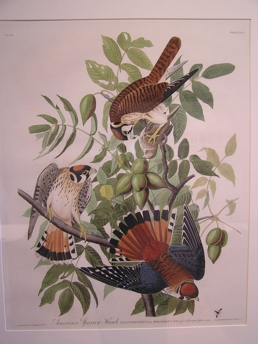Audubon's Folio of American Birds